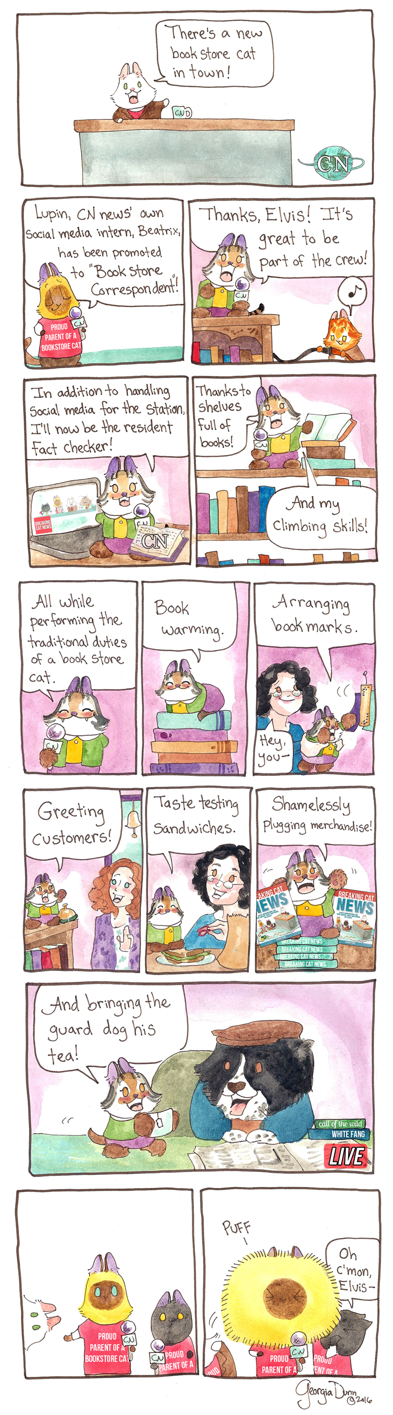 There's a new bookstore cat in town!